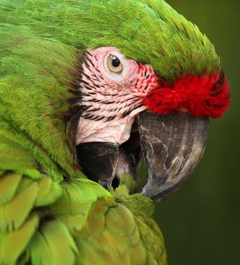 Pet Relief Disc for Birds